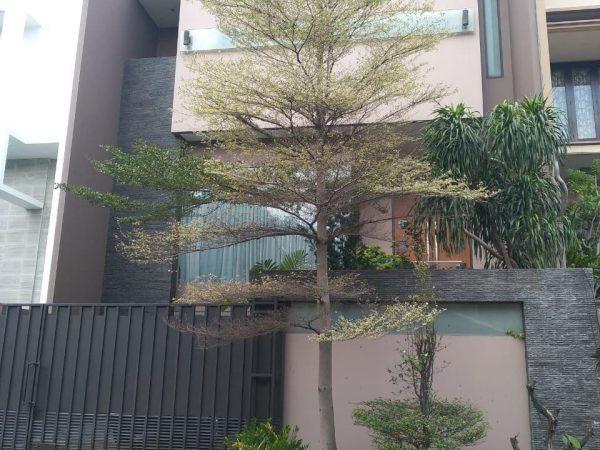 Jual Rumah Puri Kencana Jakarta Barat Lt 10x25 Lb 650m2 Bagus Rmj185